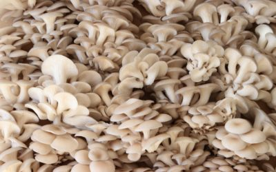 Can mushrooms really help solve the climate crisis?